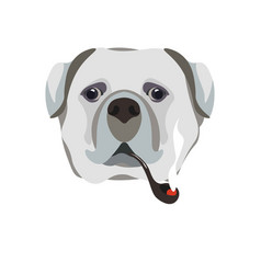 Bullmastiff breed dog with smoking pipe close-up vector