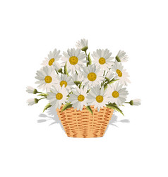 field daisies in a wicker basket vector image
