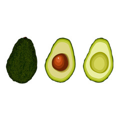 set of avocado fruit vector image