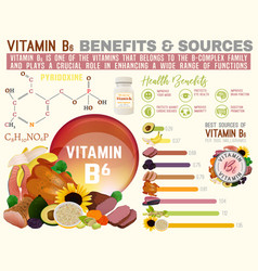 Vitamin b6 infographic vector