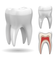 Excellent tooth vector