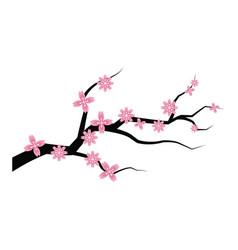 sakura flower branch spring japanese flora vector image
