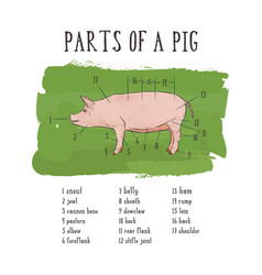 scheme and guide - pork vintage typographic vector image