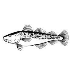 atlantic cod black and white fish vector image vector image