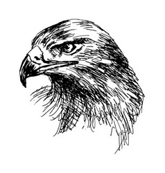 hand sketch eagle head vector image