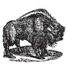 Bison vintage vector