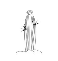 cartoon cactus sketch vector image