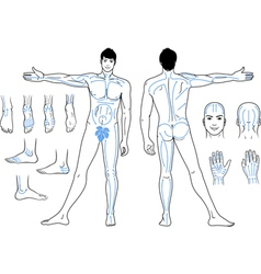 Full length front back views a standing man vector