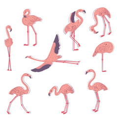 Hand drawn set of pink flamingo in vector