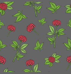 Seamless pattern with ginseng plant vector