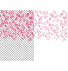 Flying translucent petals of sakura flowers on a vector