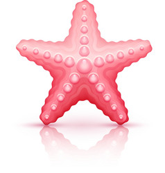 Starfish sea star isolated vector