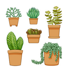 succulent in flowerpot hand drawn set collection vector image