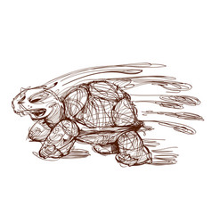 turtle sketch vector image