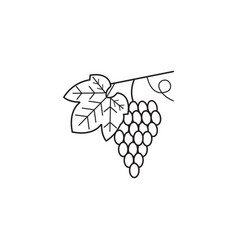 Grapes line icon healthy fruit graphics vector
