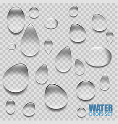 realistic transparent water drops vector image