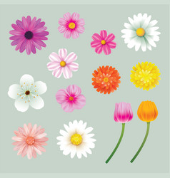 set of spring flowers colorful isolated background vector image vector image