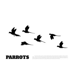 black silhouette parrots on white background vector image