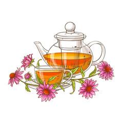 echinace purpurea tea vector image