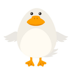 white duck on white background vector image vector image