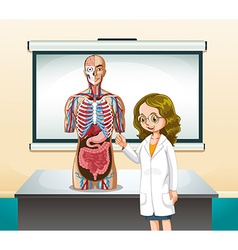 Doctor and human model in classroom vector