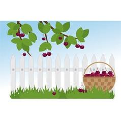Ripe cherries in the garden vector