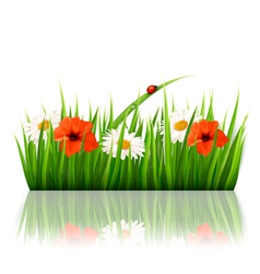 Spring background with flowers grass and a ladybug vector image