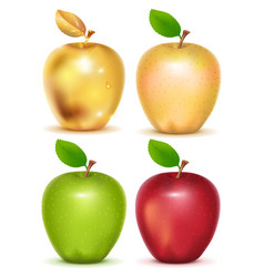 set of red yellow green and gold apple on white vector image vector image