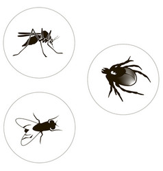 Insects set including bug fly and mosquito vector