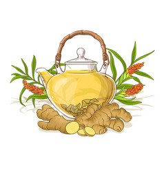 ginger tea vector image