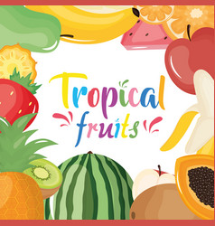 group tropical and fresh fruits frame vector image
