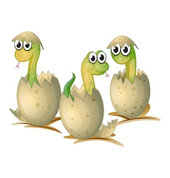 three newly cracked eggs a snake vector image