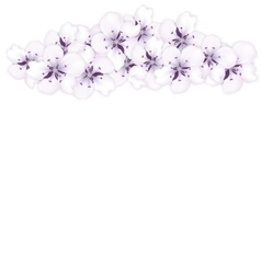 Top frame bouquet sakura blue flowers vector image vector image