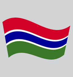 flag of the gambia waving on gray background vector image vector image