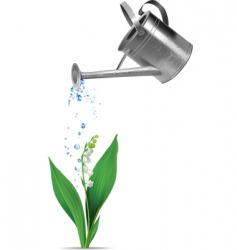 watering can and lily vector image vector image