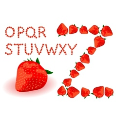 strawberries alphabet vector image