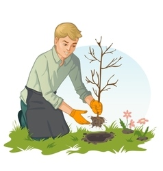 Young man planting sapling in garden vector image