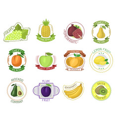 fruit label fruity apple orange banana vector image vector image