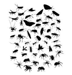 Collection of silhouettes of insects and spiders vector image