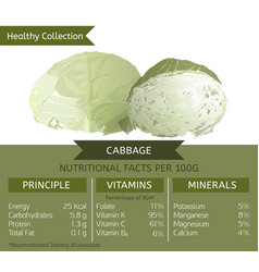 cabbage healthy collection vector image