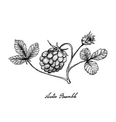 Hand drawn of arctic bramble berries on white back vector