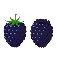 Isolated flat blackberry juicy berry with leaves vector