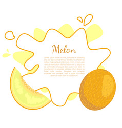 melon exotic juicy stone fruit isolated vector image