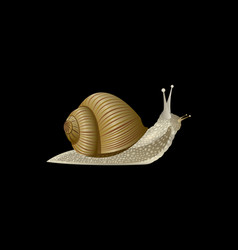 Realistic snail isolated on a black background vector