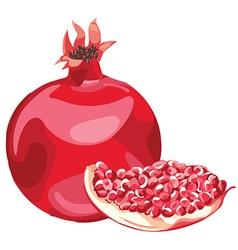 Pomegranates vector