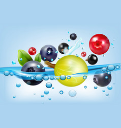 poster with berries and water vector image vector image