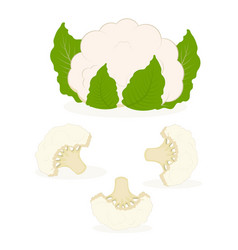 Set with cauliflower vector