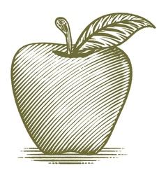 Woodcut Ripe Apple vector