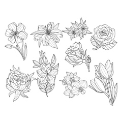 Flower Set Hand Drawn vector image vector image