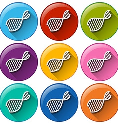 Buttons with DNA symbols vector image